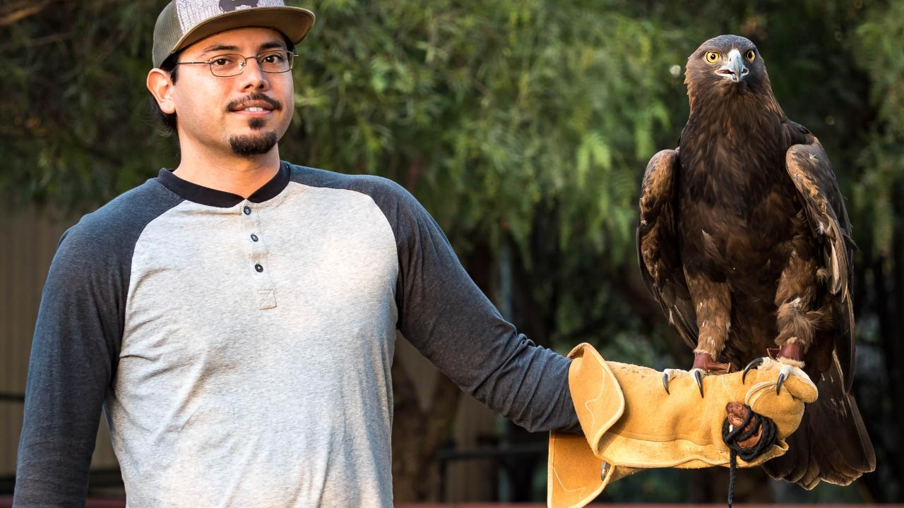 Volunteer with Sullivan the golden eagle on glove