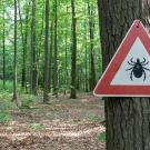Tick caution sign in forest