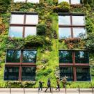 Plants grow on sustainable building